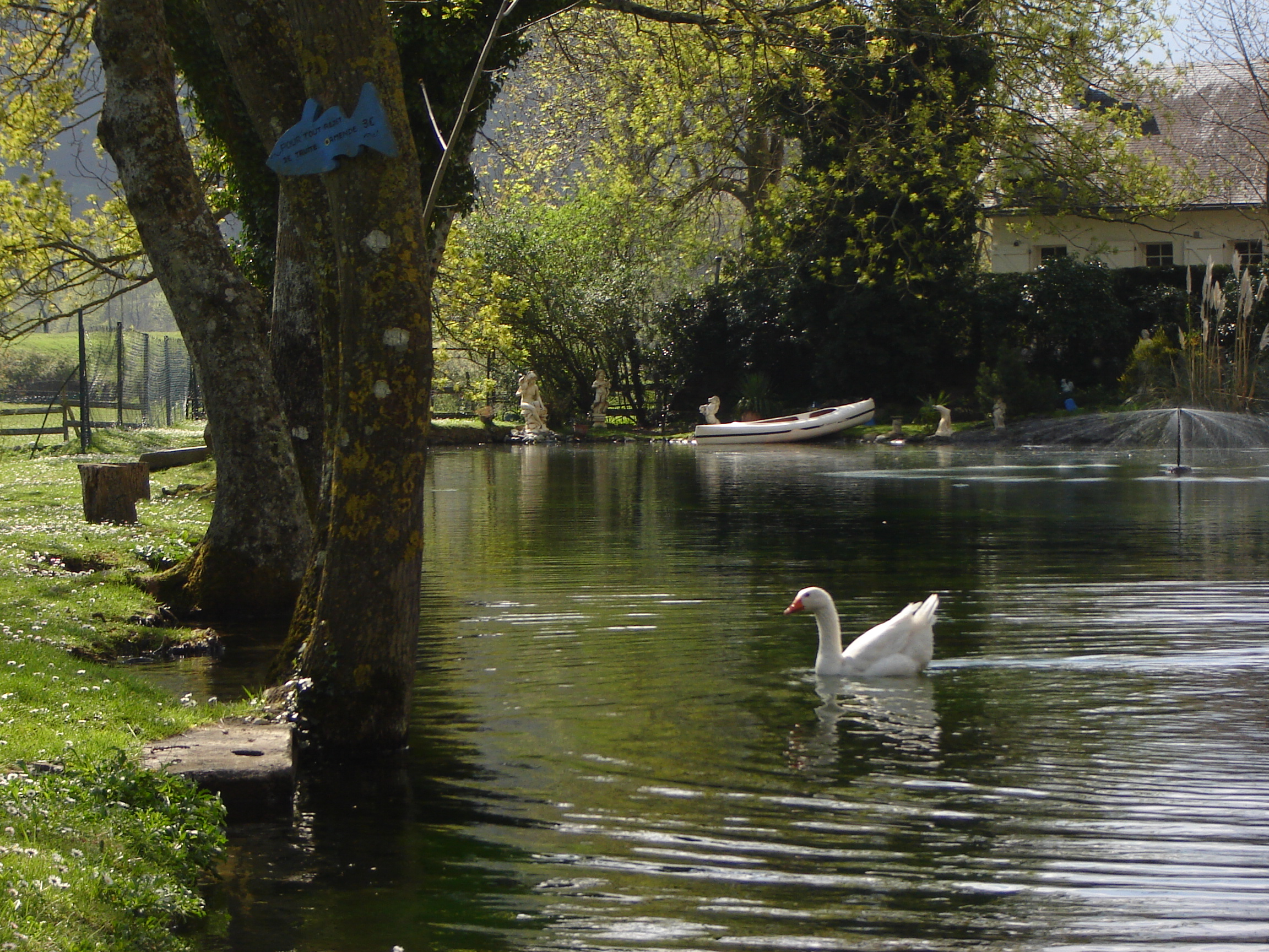 Oie sur le Lac de pêche.